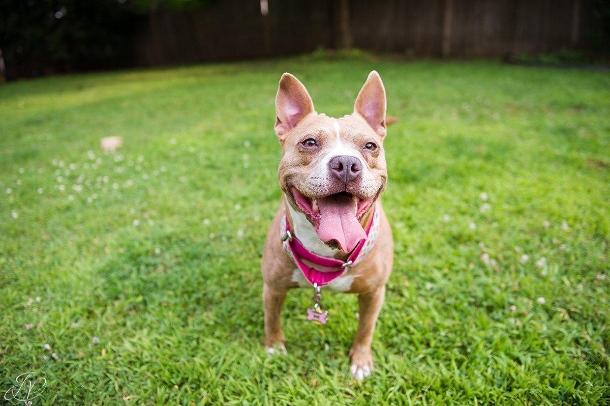 dog rescue, albany pet portrait photographer