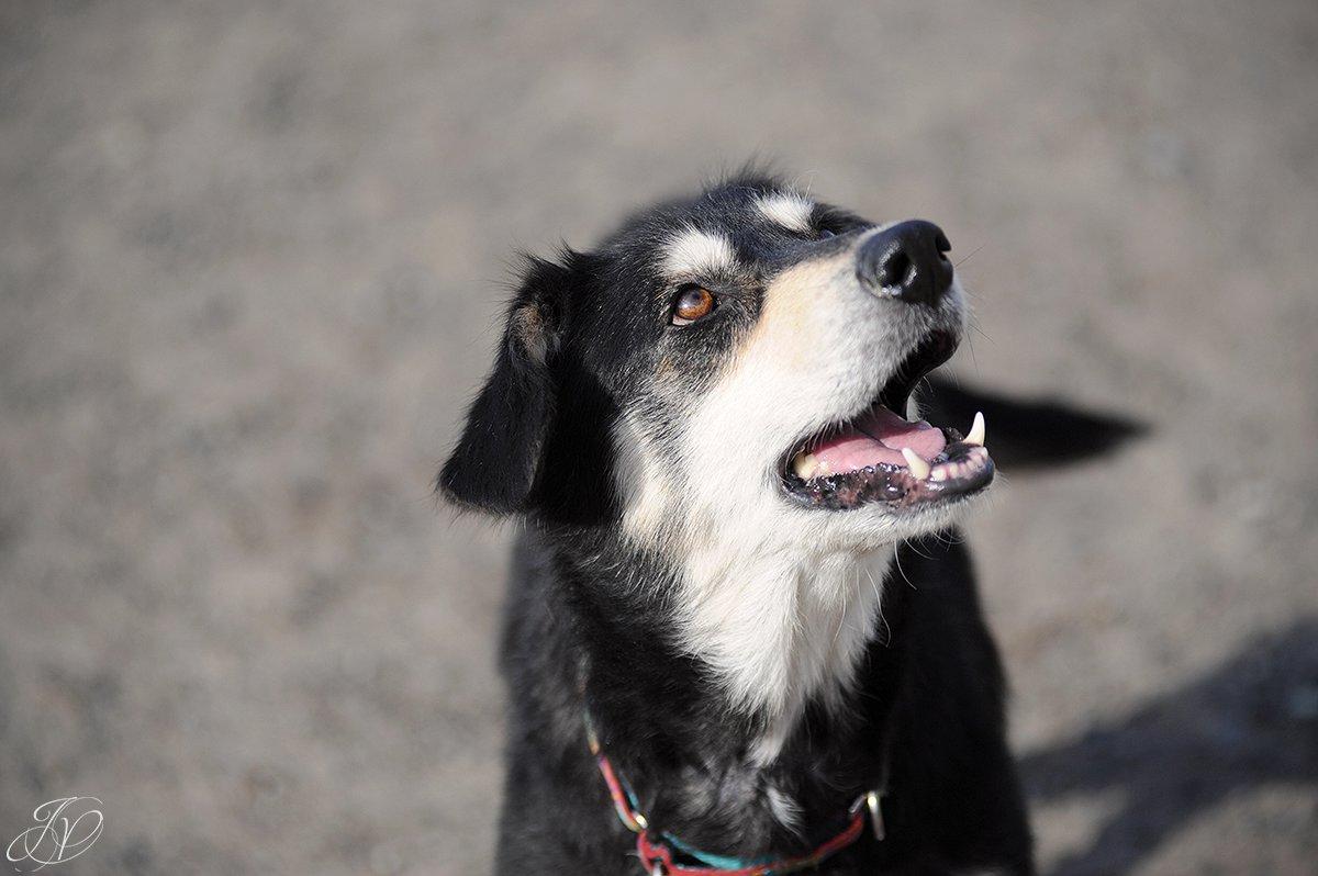 shelter dog, animal rescue, dog rescue, adopt