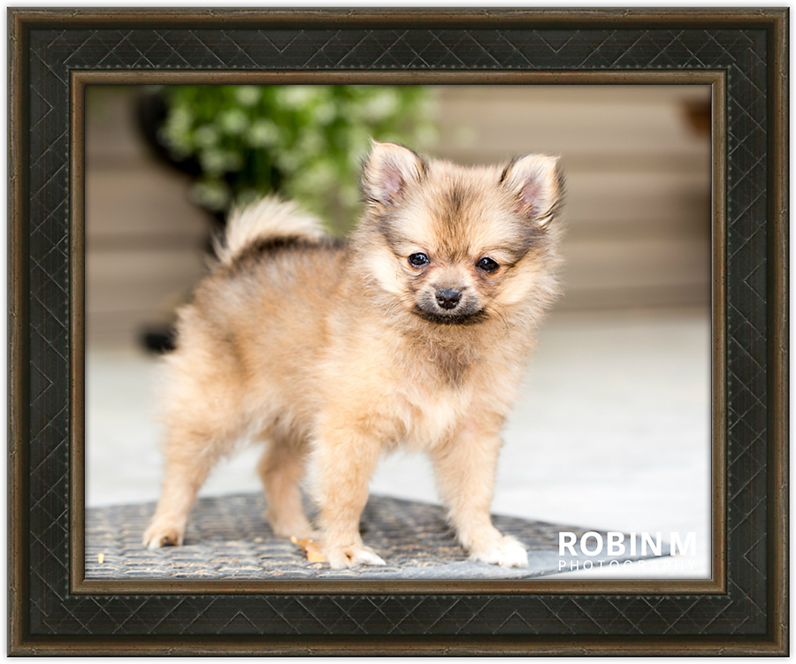 Small brown dog, photo frame