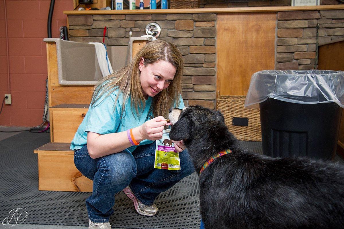 Dog getting treat after bath, treating a dog photo, harveys home garden and pet center, canine skin disease, regional animal shelter