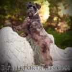 Butler Barks
