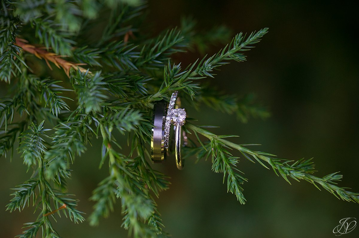 Unique wedding ring shot, with the rings on a pine sprig.