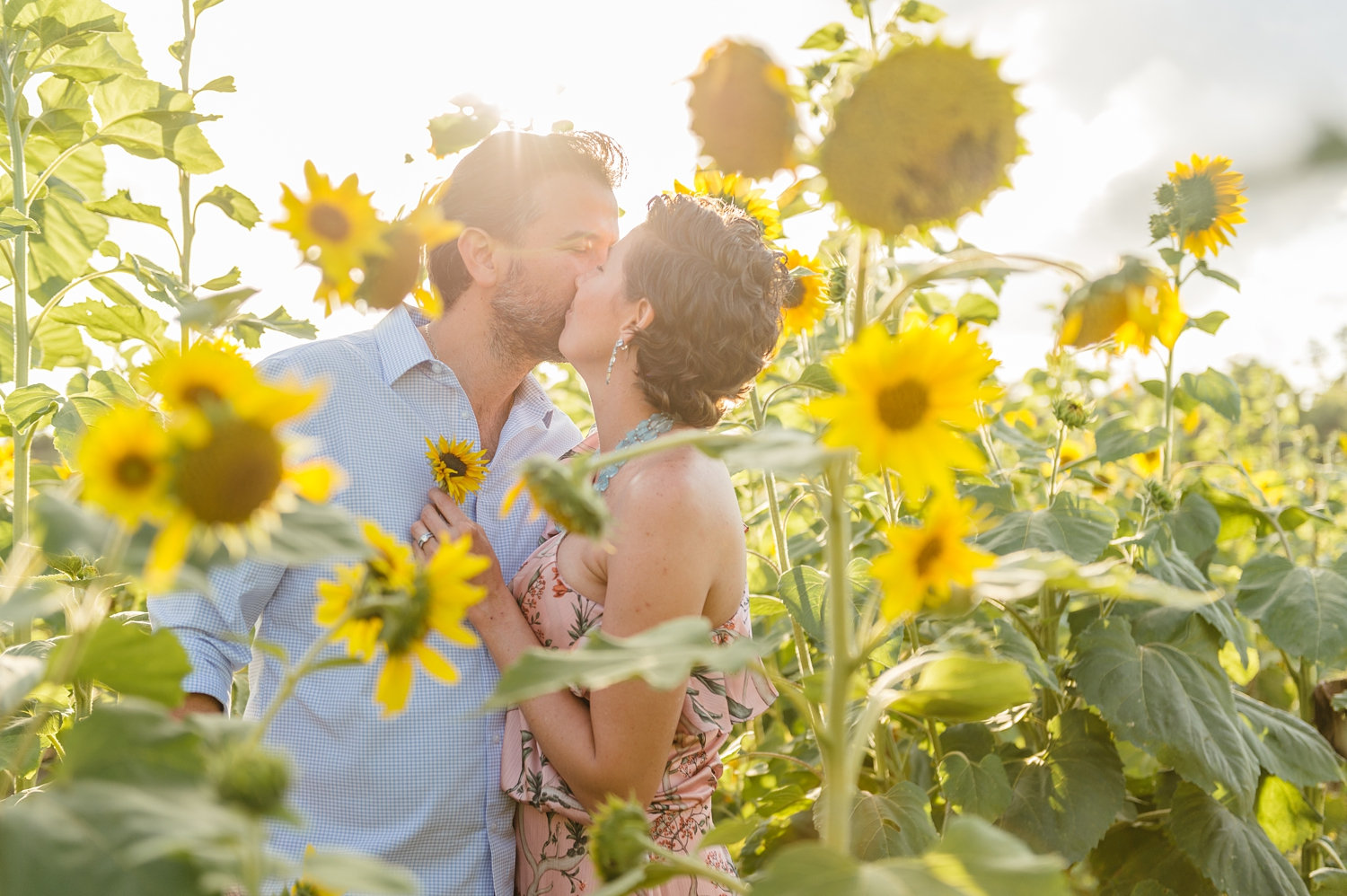 couple kissing in a sunflower field, parents kissing in a sunflower field, Rya Duncklee Photography